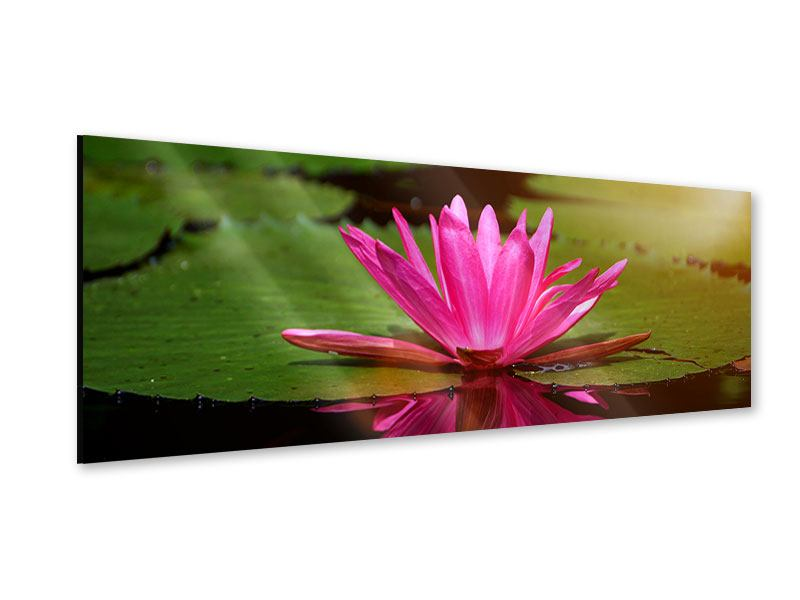 Panoramic Acrylic Print Lotus In Water