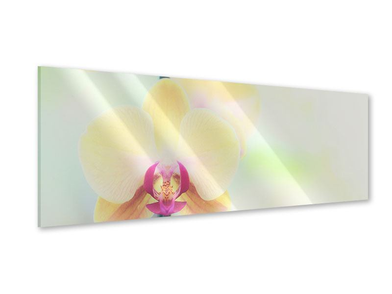 Panoramic Acrylic Print Lovely Orchid