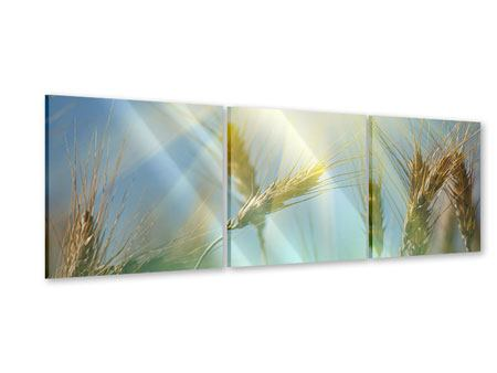 Panoramic 3 Piece Acrylic Print King Of Cereals