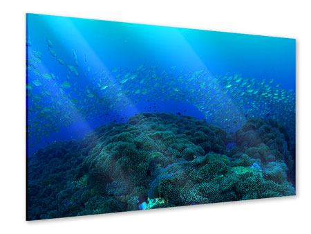 Acrylic Print Schools Of Fish