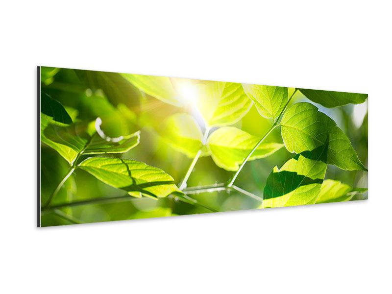 Panoramic Aluminium Print Go Green