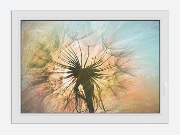 Window Print XXL Dandelion