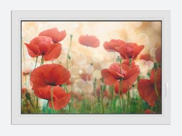Window Print The Poppy