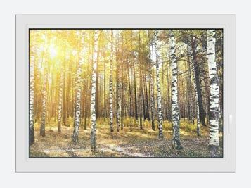 Window Print Birch Forest