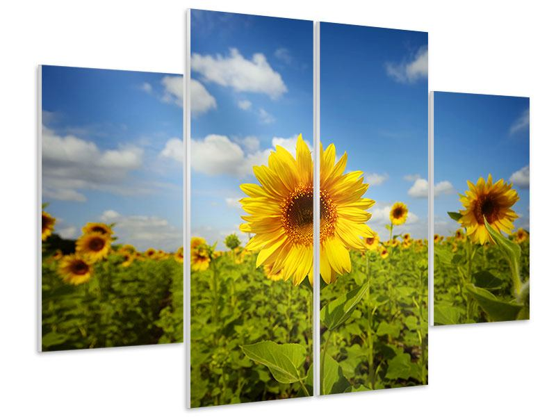 4 Piece Forex Print Summer Sunflowers