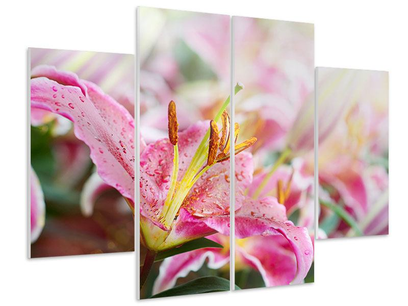 4 Piece Forex Print Lilies In Dew