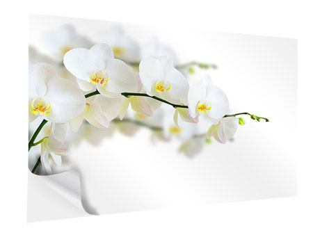 Self-Adhesive Poster White Orchids