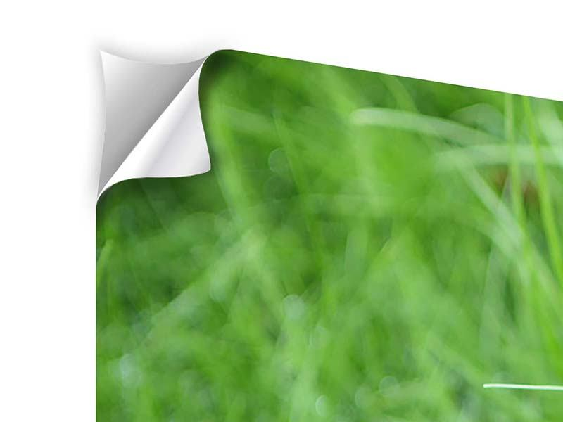 5 Piece Self-Adhesive Poster Blades Of Grass