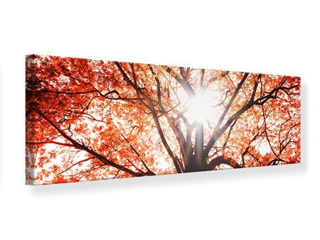 Panoramic Canvas Print Light Of Autumn