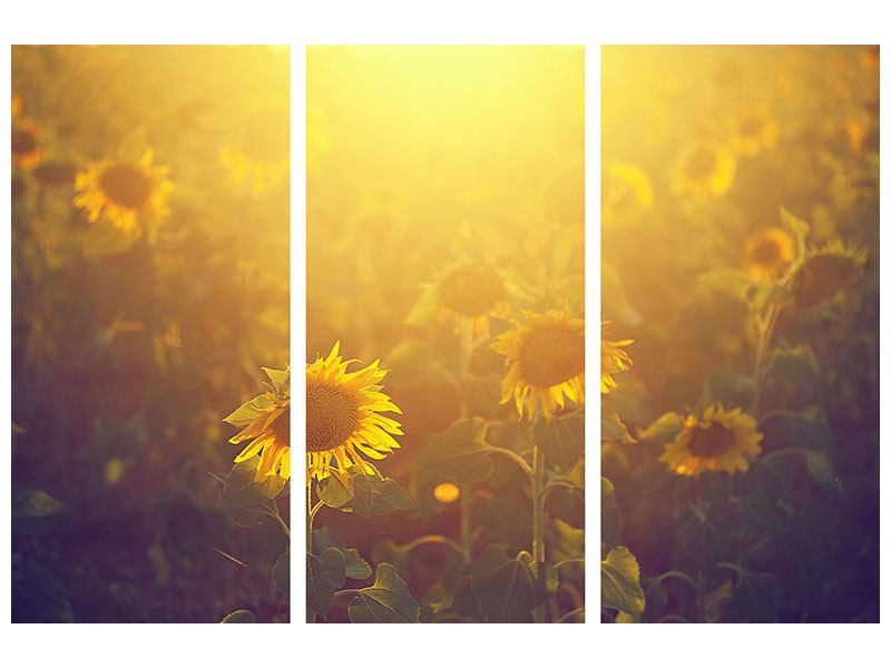 3 Piece Canvas Print Sunflower In Golden Light