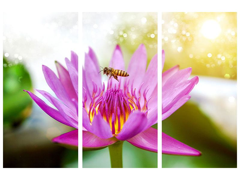 3 Piece Canvas Print The Lotus With Bee