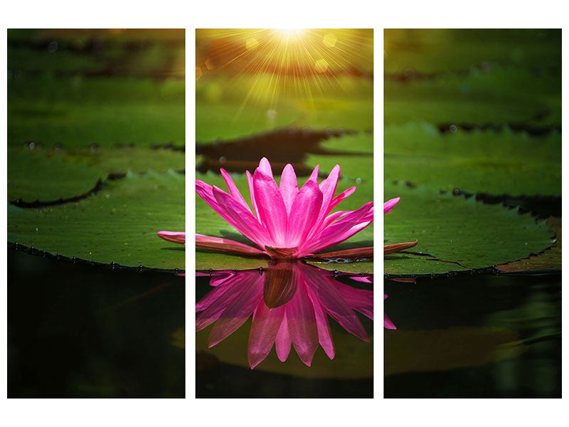3 Piece Canvas Print Lily Reflection