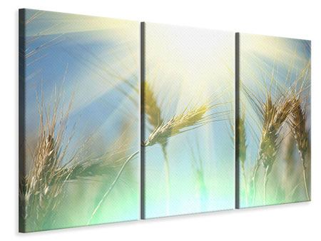 3 Piece Canvas Print King Of Cereals