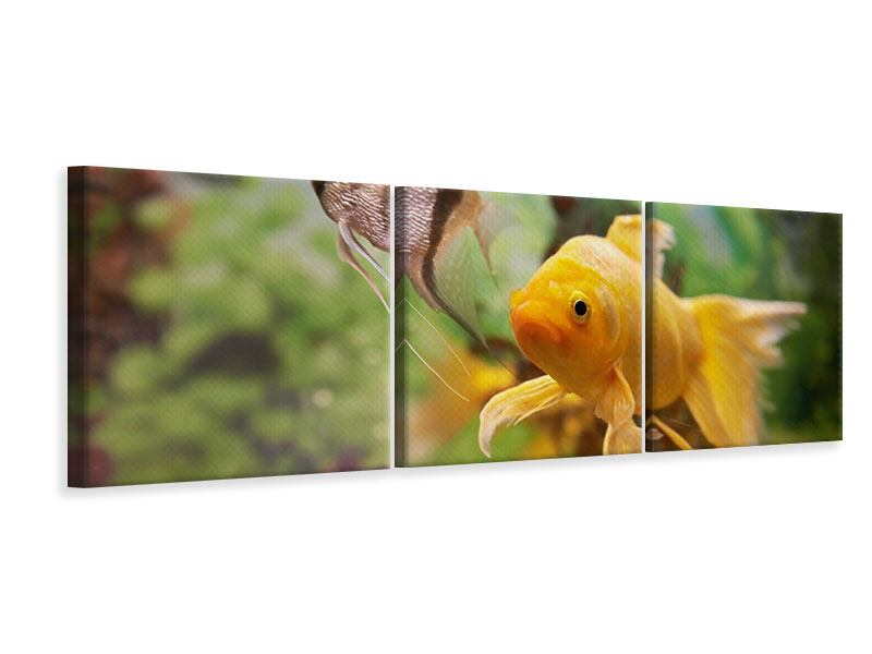 Panoramic 3 Piece Canvas Print Colorful Fish