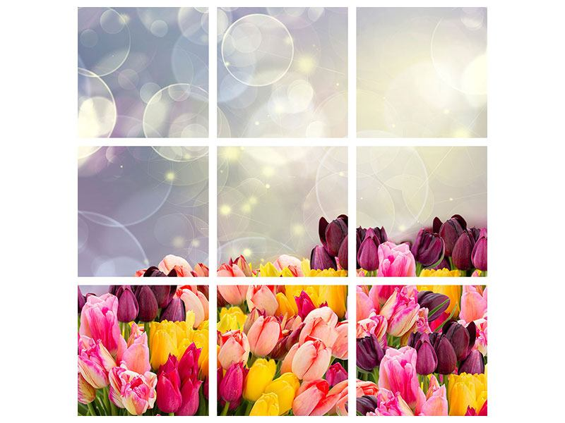 9 Piece Canvas Print Colorful Tulip Bed In The Play Of Light