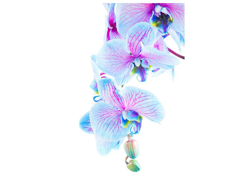 Metallic Print Orchid Butterfly