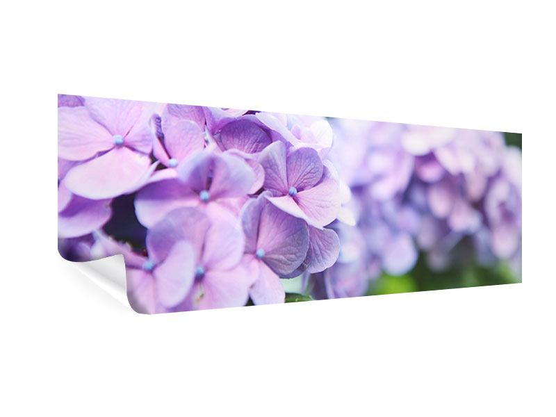 Panoramic Poster Hydrangeas