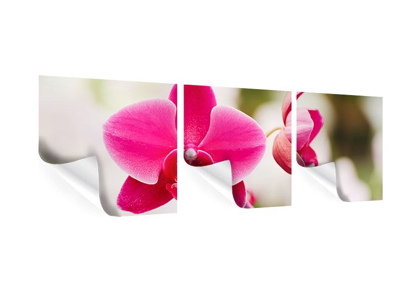 Panoramic 3 Piece Poster Perspective Orchids