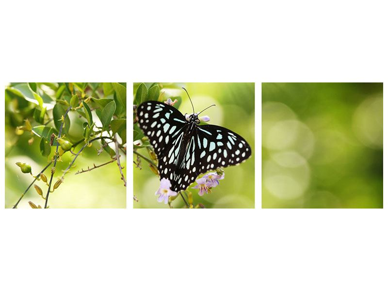 Panoramic 3 Piece Poster Papilio Butterfly XXL