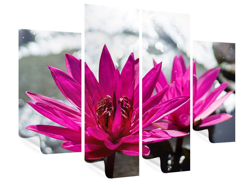 4 Piece Poster Two Water Lilies In Pink